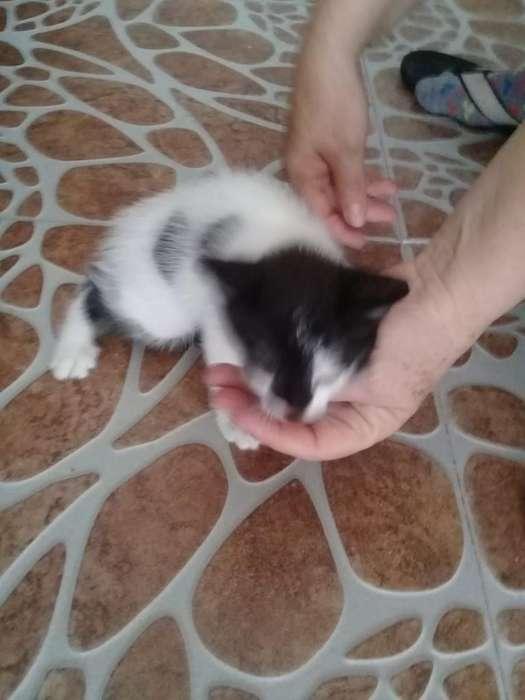 Regalo.dos Gatos