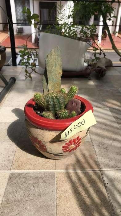 Cactus con Matera