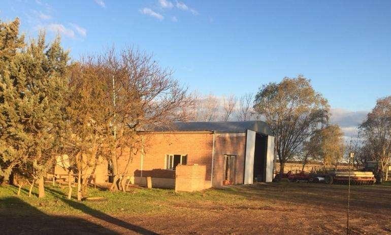 <strong>campo</strong> ganadero de 1200 ha en zona de Ing. Foster.