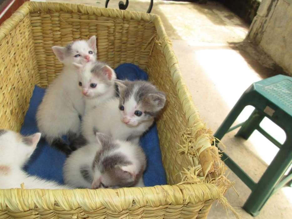 Doy en adopcion <strong>gatitos</strong> para entregar 20 julio en Medellin