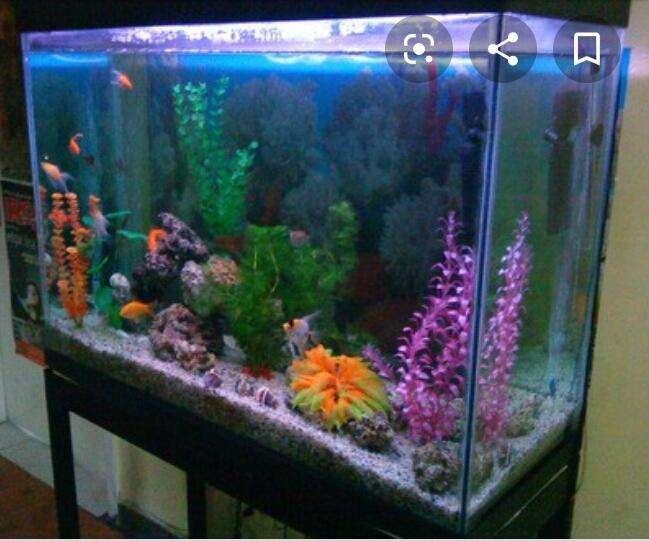 Super promocion venta de acuario de pesces 3134373160
