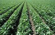 <strong>campo</strong> 100% agrícola Roldan para urbanizar