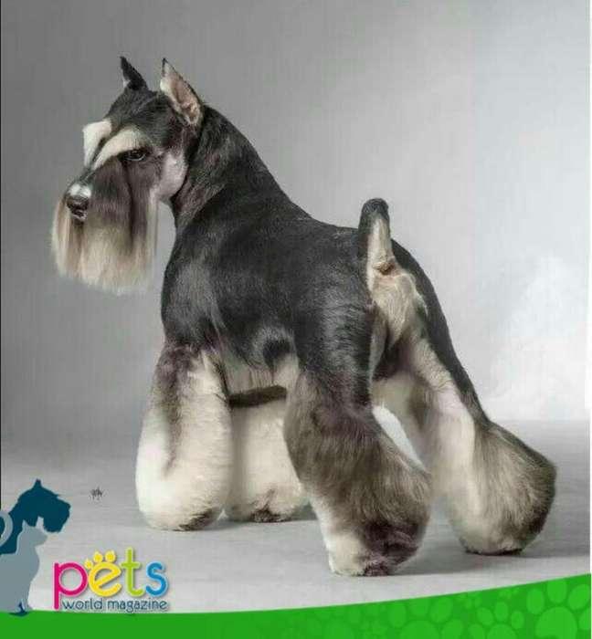 Se Busca Peluquero Canino Grooming
