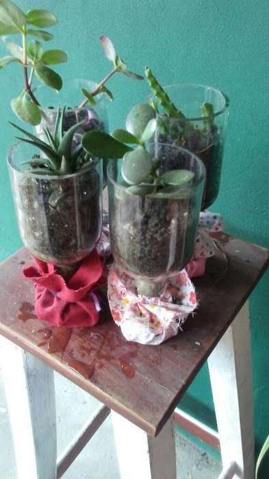 Plantas Y Macetas Artesanales