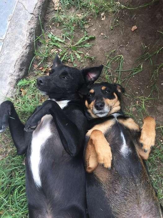 Perros Abandonados en Adopcion