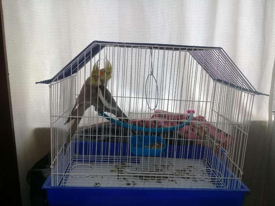 Jaula para Aves Domesticas