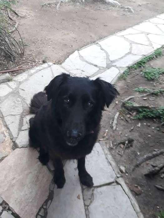 Maggie, perra tamaño grande, en adopción