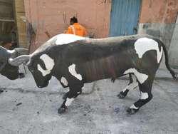 escultura de toros tamaño rea