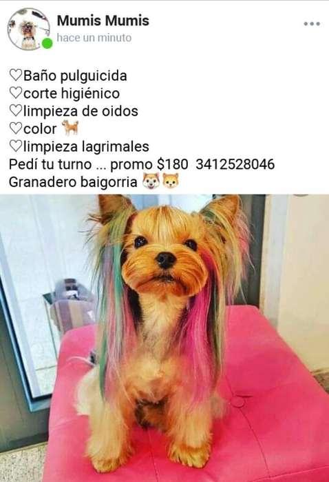 Corte Canino
