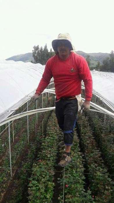 Trabajo en Invernaderos
