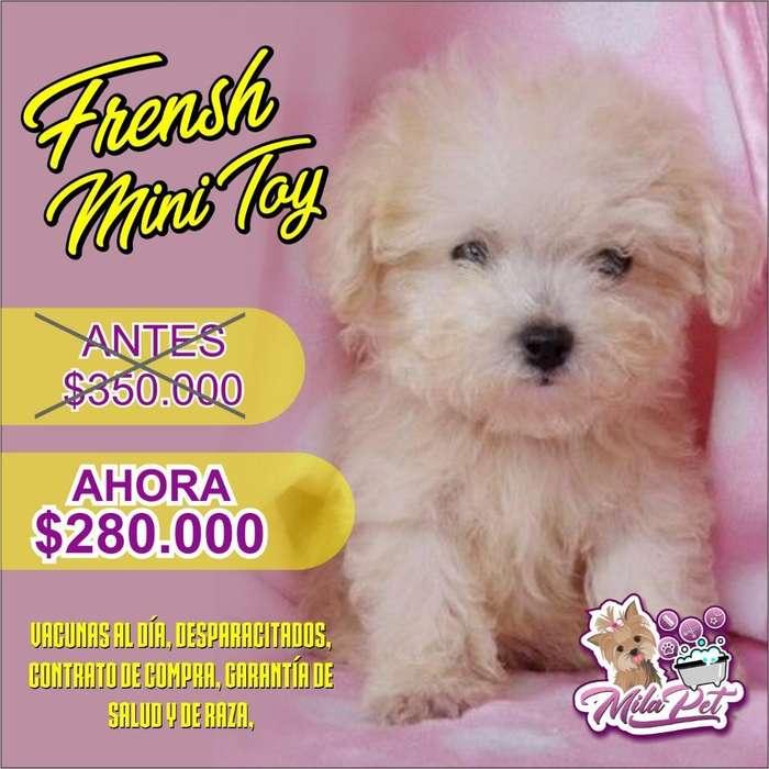 French Poodle Mini Toy Lindos