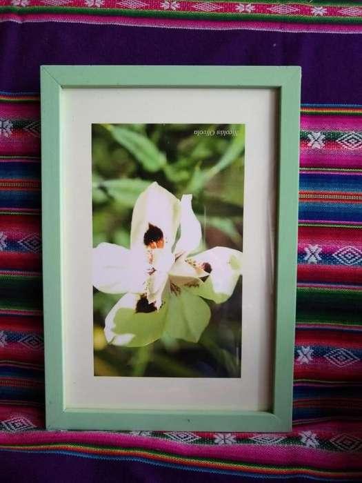 Cuadros de Fotos Autor 30 Cm por 20 Cm
