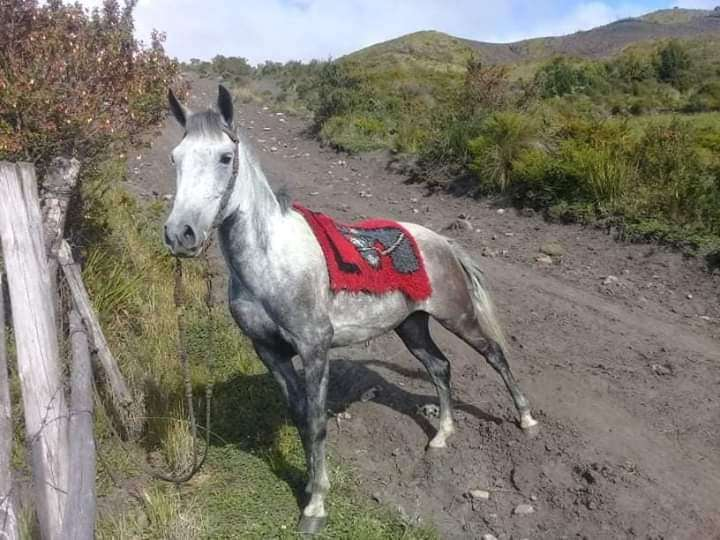 Se vende caballo medio arabe