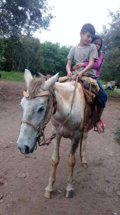 Vendo caballo manso