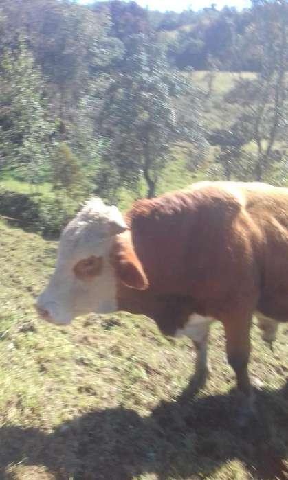 Personal para trabajar en ganaderia (Uregente)