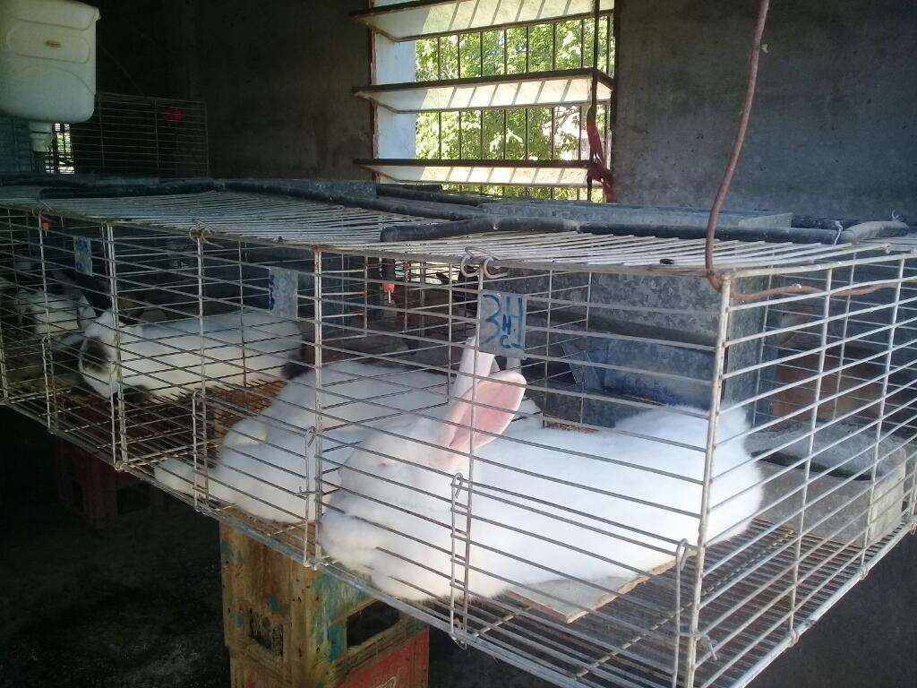 Jaulas para La Cria de Conejos