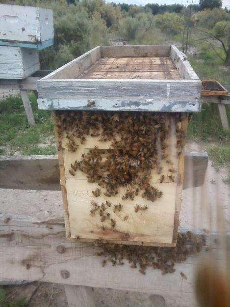 Vendo nucleos de abejas de Mendoza