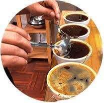Cuchara de Catación de Café en Acero Inoxidable