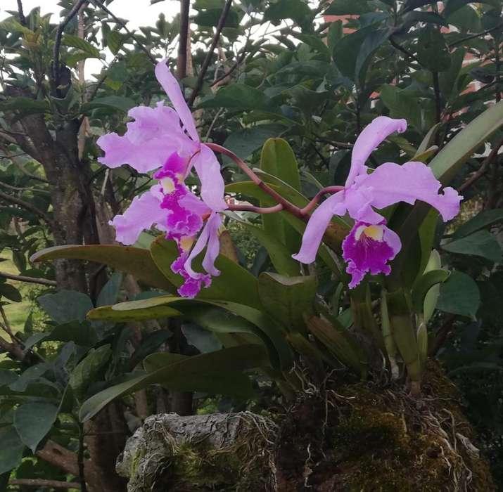 Venta de Orquideas