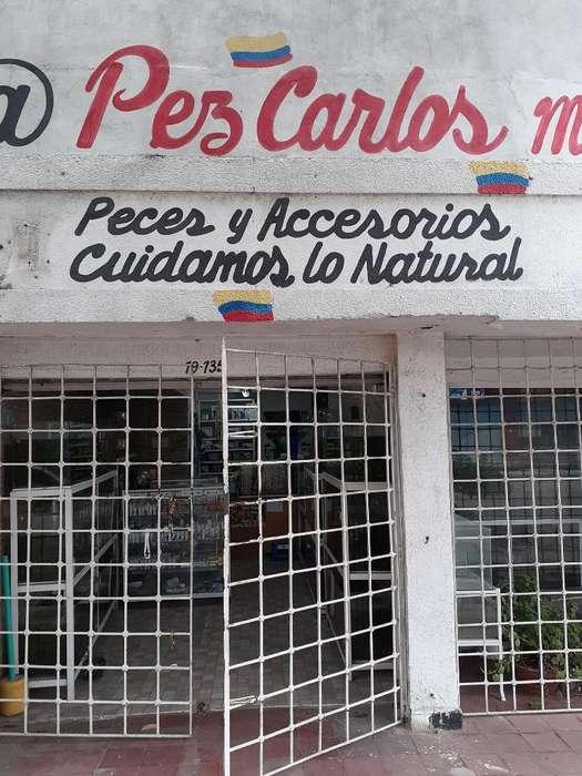 Venta de Peces Ornamentales Y Plantas.