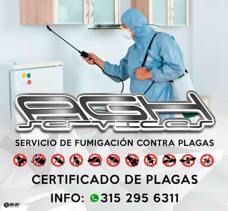 Fumigaciones Y Certificados