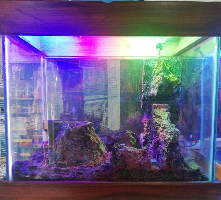 Acuario Y Accesorios para <strong>peces</strong>