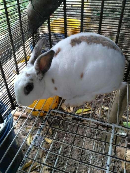 Vendo <strong>conejo</strong>s Rex