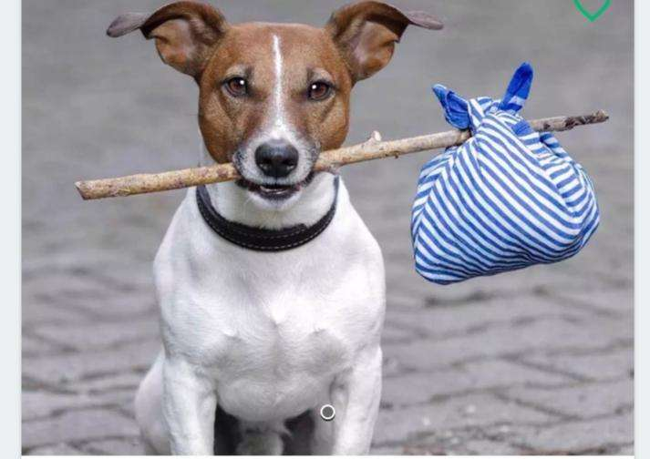 Quiero Adoptar Un <strong>perrito</strong> Pequeo Guayaquil