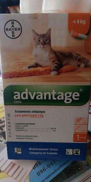 Advantaje Antipulga Gato