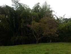 Lote En Venta En Pereira El Tigre Cod. VBPRE39210