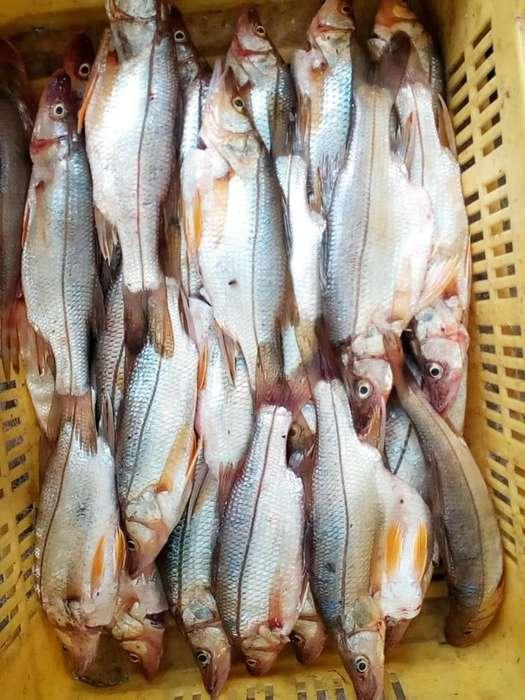 pescado robalo para hoteles y restaurantes