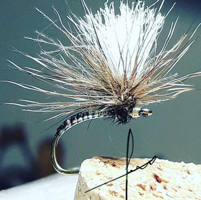 12 moscas secas