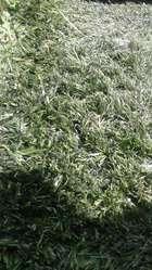 Vendo Pasto Sintético ideal para cancha de Fútbol o parquización