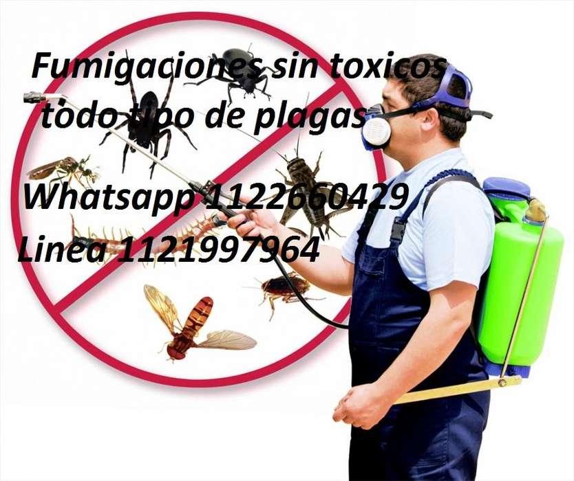 Control de plagas fumigaciones sin tóxicos zona sur 1122660429