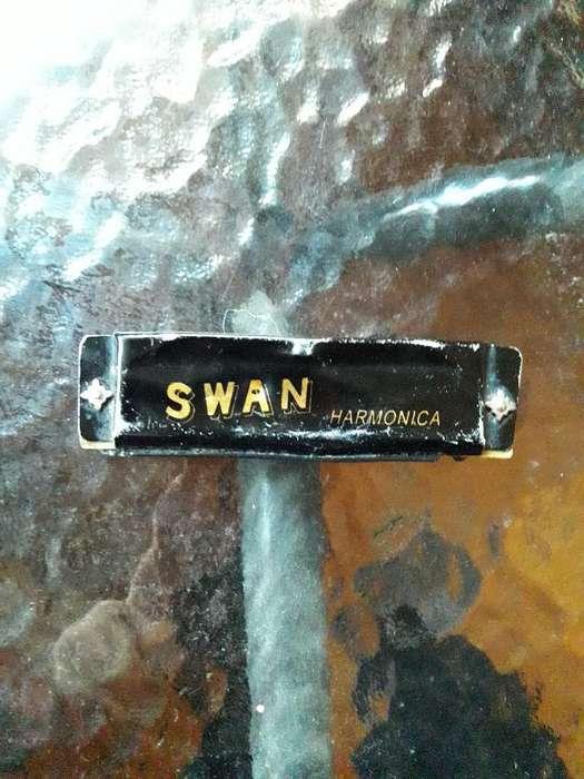 Harmonica Swan
