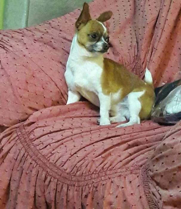 Busco Novia Chihuahua