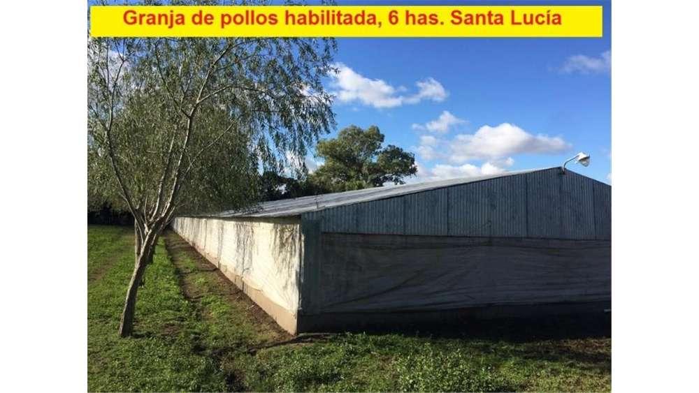 Rural 2000 - UD 260.000 - Campo en Venta