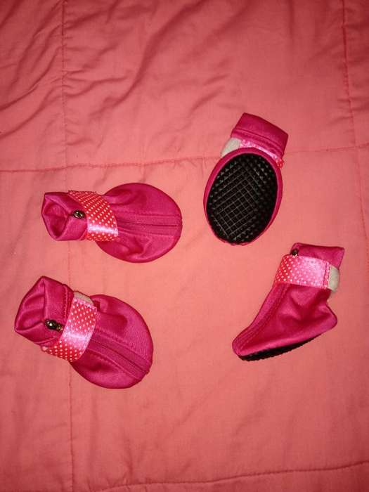 Zapatos para Canino