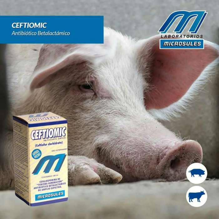 Productos Criadero Cerdos