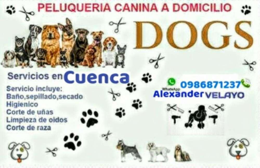 Peluqueria Canina en Casa en Cuenca