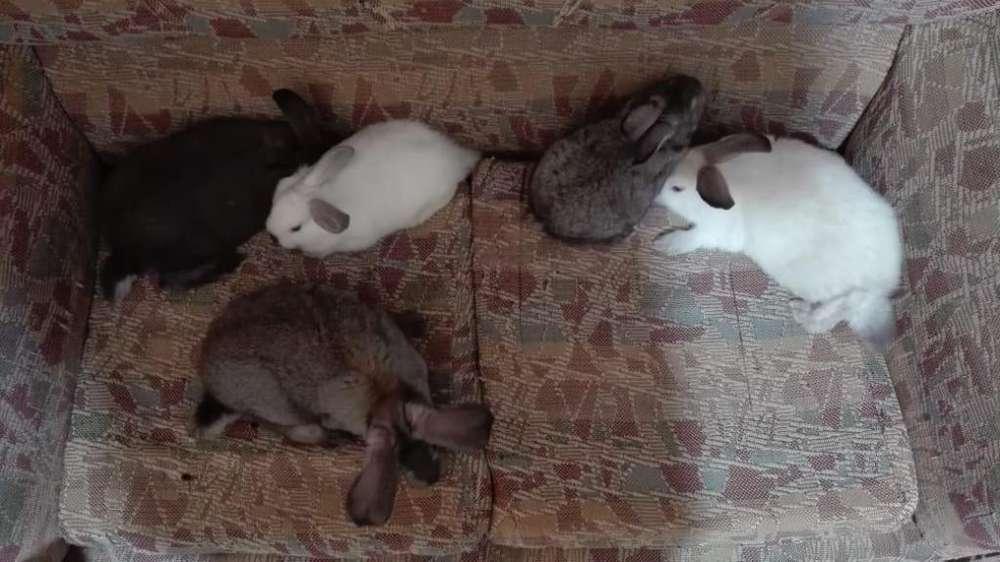 se vende lindos conejos para mascotas
