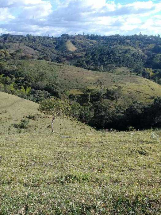 Vendo 3 Lotes en Zona Rural de Timbío