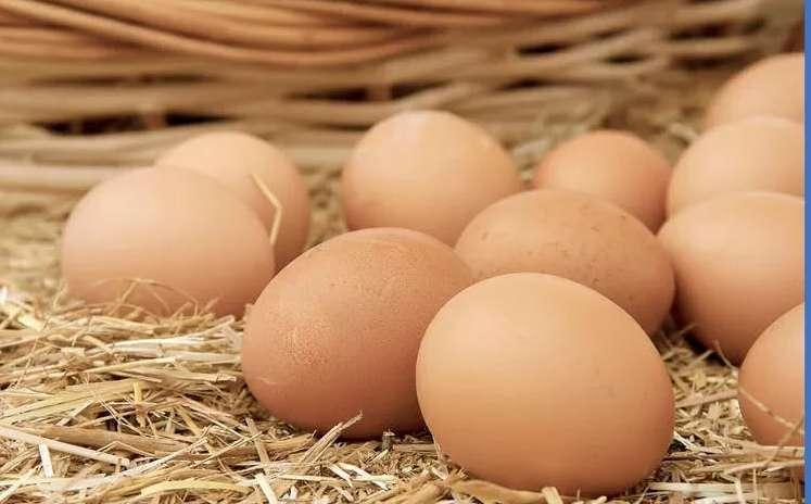 Venta de Huevos de Gallina de Corral
