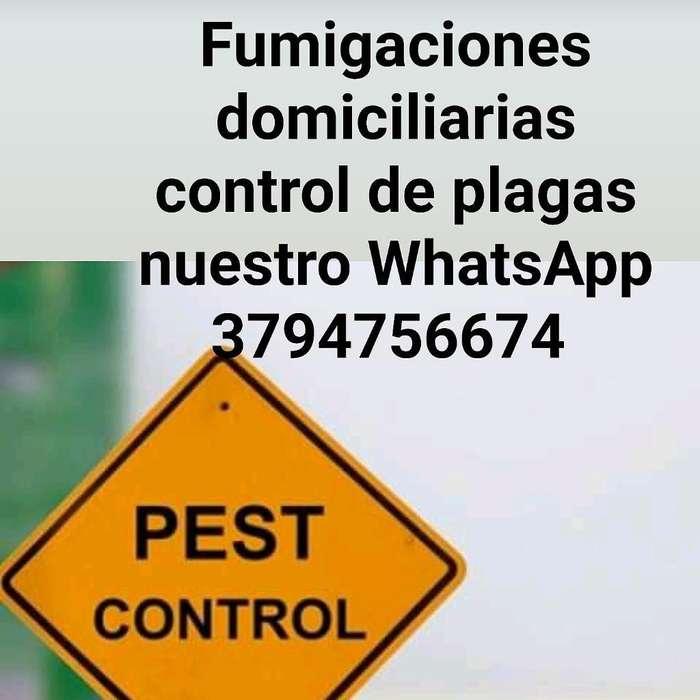 Fumigaciones Domiciliarias Control de Pl