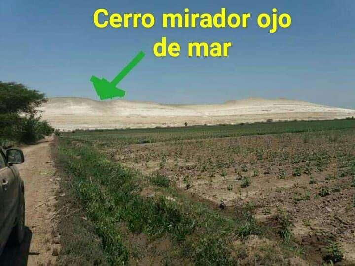 Venta de parcela de tierra agricola 4.58 has en CaucatoPisco