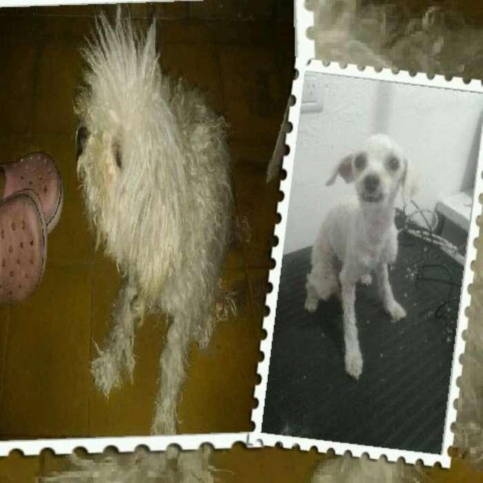 Pelu Canina Precios Bajos