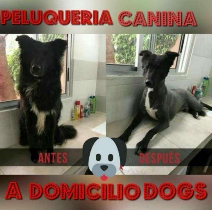 Peluquería Canina Adomicilio Cuenca