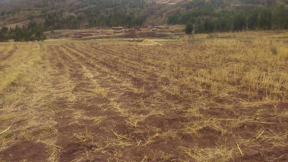 Terreno en Oropesa 5 minutos de la plaza 6500 m2