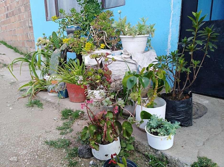 Vend Plantas de Todo Precio a Domicilio