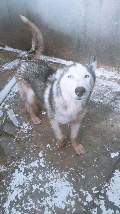 Se Vende Lobo 2257144 a 2oo
